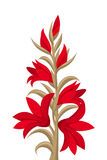 Red gladiolus flowers. Illustration of red gladiolus flowers and buds isolated on white Stock Photo