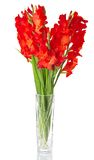 Red gladiolus in vase Royalty Free Stock Photography