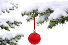 Red glass ball. Christmas evergreen spruce tree and  red glass ball on white background Stock Photos