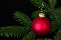 Red glass bauble Christmas ornament over fir branch Stock Image