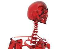 Red glass skeleton Stock Photos