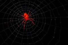 Red Glass Spider and Web Stock Images