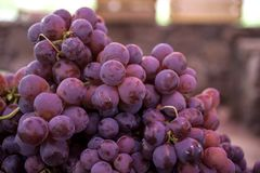Red Globe Grapes. Dusty red globe grapes fro farmers market in Mexico stock photo