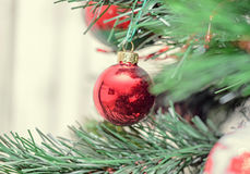 Red globe ornament, Christmas tree, pine close up Stock Images