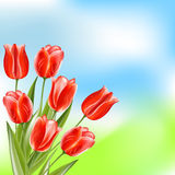 Red glossy tulips on summer nature background Royalty Free Stock Photo
