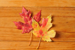 Red and gold autumn leaf background Royalty Free Stock Photo