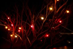 Red lights on Tree Branches royalty free stock photography