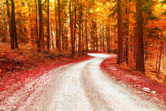 Red and gold color saturated autumn season forest road Stock Photo