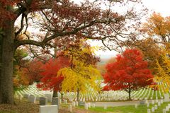 Red and gold fall colors at Arlington Cemetery. Beautiful autumn colors on a cloudy day Royalty Free Stock Photo