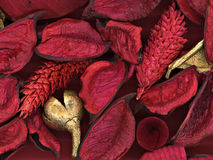 Red and golden. Close-up of red and golden leafs, petals and  cones Stock Photography