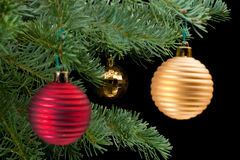 Red  and golden baubles on pine branch Royalty Free Stock Photography