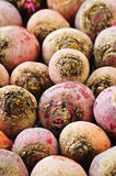Red and golden beets Stock Images