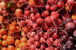 Red & Golden Beets Royalty Free Stock Images