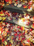 Red and golden maple leaves on stone steps Royalty Free Stock Photography