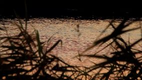 Red golden water stock video footage