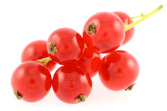 Red gooseberries. Isolated on white background royalty free stock photos