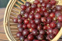 Red Gooseberries closeup Stock Image