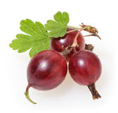 Red gooseberries with green leaves  on white Stock Photo