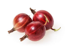 Red gooseberries isolated on white Royalty Free Stock Image