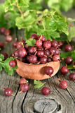 Red gooseberries in wooden bowl Royalty Free Stock Photos