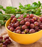 Red gooseberries Stock Images