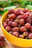 Red gooseberries Stock Image
