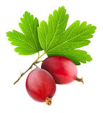 Red gooseberry Royalty Free Stock Images
