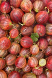 Red gooseberry close-up background, vertical Stock Image
