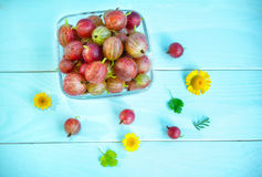 Red gooseberry, flowers and leaves Stock Photo