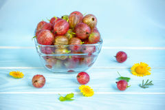 Red gooseberry, flowers and leaves Stock Photos