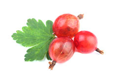Red gooseberry fruit with leaf isolated on white Royalty Free Stock Photography