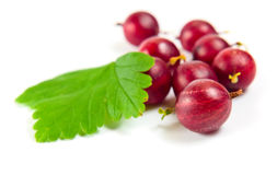 Red gooseberry isolated on a white background. Stock Photos