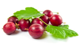 Red gooseberry isolated on a white background. Royalty Free Stock Photography