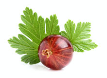 Red gooseberry with a leaf. Royalty Free Stock Photos