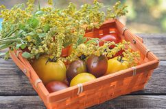 Fresh harvest of red and yellow tomatoes in a wicker basket on an old wooden table. Red gourd, vegetable set on an old wooden table basket with tomatoes. The Stock Photos