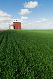 Red Grain Elevator Blue Skies Agriculture Green Crops Field Stock Photography
