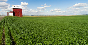 Red Grain Elevator Blue Skies Agriculture Green Crops Field Stock Image