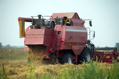 Red grain harvester combine in a field Stock Photos