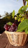 Red grape Stock Photo