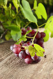 Red grape stock photos