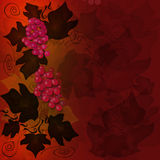 Red grape background Stock Photography