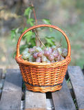 Red grape in brown wicker basket on wooden table closeup Royalty Free Stock Images