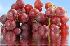 Red grape bunch closeup in water reflection sky background Royalty Free Stock Photography