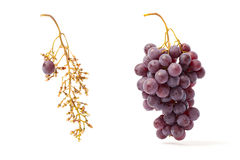 Red Grape And Bunch Stock Photography