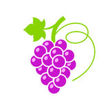 Red grape colorful vector illustration Royalty Free Stock Photos