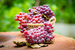 Red grape fruits Royalty Free Stock Images