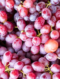 Red Grape Fruits. Stock Images