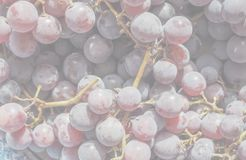 Red grape fruits, soft faded tone background. Red grape (Vitis vinifera) fruits, healthy vegetarian food, delicate soft faded tone useful as background royalty free stock image