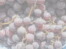 Red grape fruits, soft faded tone background. Red grape (Vitis vinifera) fruits, healthy vegetarian food, delicate soft faded tone useful as background stock photography