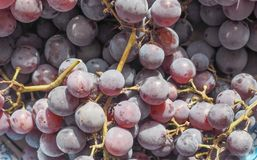 Red grape fruits Stock Photography